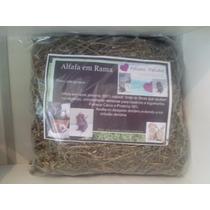 Chinchilas - Alfafa Rama - 800 Gramas