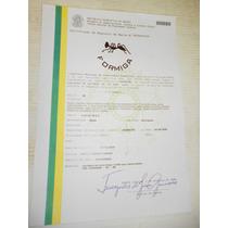 Grande Faca Formiga Cabo Chifre Bovino Certificada