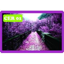 Adesivo Decorativo Cerejeira Sakura Parcelado S/ Juros Ca