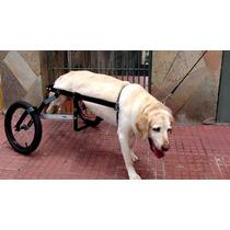 Cadeira De Rodas Para Cão Labrador Até 35kg Maxlocomotion