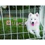 Cercado Branco Pet Canil Cães Coelhos Cão - 6 Lados- Jardpet