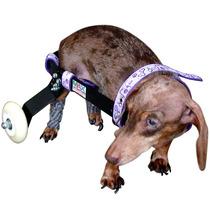 Cadeira De Rodas Para Cachorros Deficientes Fabrica Em Sp