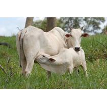 Raltex Cria Nucleo Para Vacas De Cria / Bezerros