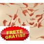 Cistos D Branchonetas (ovos) +manual De Criação Frete Grátis