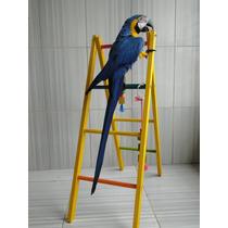 Brinquedos Para Araras/papagaios/jandai/cacatua Escada 1,90