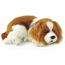 Perfect Petzzz (filhotes) Cachorro Cavalier King Charles Ime