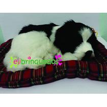 Filhote Cachorro Pelúcia Border Collie Perfect Petzzz 20cm