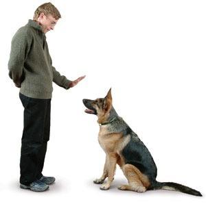 Apito Ultrasonico P/ Adestramento De Cachorro Cão Otimo