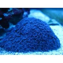 Corais Para Aquario Marinho - Mudas De Corais