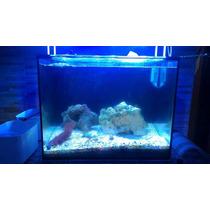 Aquario Marinho Nano Completo 45x35x42 Com Sump Traseiro