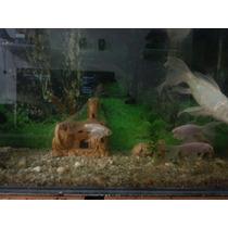 Aquario 200litros Completo (filtro Atman)