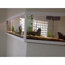 Aquários E Móveis Sob Encomenda!!! - Aquarium Shopping