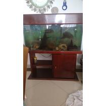 Aquario Completo Com 2 Peixes Oscar, Um Bagre Vendo Urgente