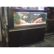 Aquarios Faixa Preta 150x40x60 Com Sump Completo E Movel