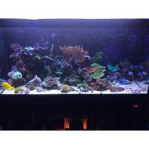 Aquario Marinho Completo - Peixes, Corais E Equipamentos Top