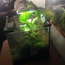 Aquario 15l Plantado Com Camarões - Novo (importado)