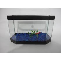 Aquario Beteira Para Peixe Betta