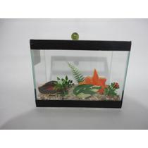Aquario Beteira Para Peixe Betta Plantado