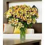 Astromélias Colombianas Creme - Flores Naturais