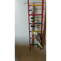 Brinquedo Escada 0,60 Cm P/ Calopsita Encanto Das Aves