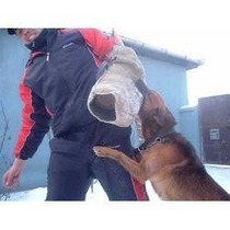 Golden!! Para Todas As Raças Adestramento De Cães Em 3 Dvds