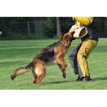 Pastor!!! Para Todas As Raças, Adestramento De Cães 1 Dvd
