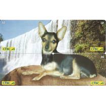 Cartão De Telefone-puzzle Pinscher