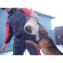 Rottweiler Para Todas As Raças Adestramento De Cães Em 3dvds