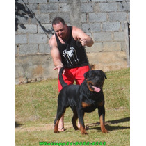 Top Macho Rottweiler , Super Sangue , Jecki X Any