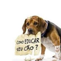 Adestramento De Cachorro Adulto Filhote Frete Grátis!