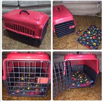 Caixa Para Transporte De Animais De Porte Pequeno
