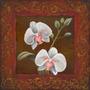 Orquídea Estudo Ii Poster Impressão Tom Madeira