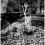 Poster (46 X 61 Cm) Boy With Rake Cleaning Autumn Leaves