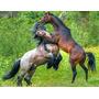Aluguel Baias Para Cavalos R$ 550,00 - Santa Isabel - Sp
