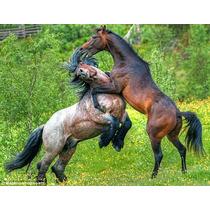 Aluguel Baias Para Cavalos R$ 550,00