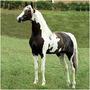 Cavalos 3 Dvd´s - Monty Roberts + Redeas + Casqueamento
