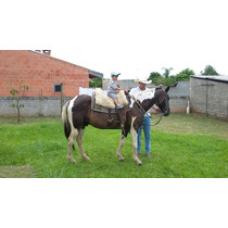 Cavalo Pampa De Charrete E Sela