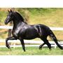 Cavalo Raça Pura Com Pedrigre