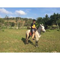 Cavalo Macho Capado Manso De Sela Bela Pelagem Maricá Rj