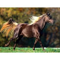 Cavalos/éguas/potros/manga Larga/kit Tratamento/frete Grátis