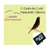 Ensino Canto Paracambi Filhotes Curió 2 (sd)