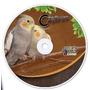 Canto Calopsita - Treine Seu Pássaro De Maneira Profissional