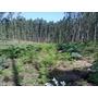 Lenha De Eucalipto Ecológico - 10 Kilos