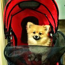 Carrinho Chalesco Confort Ride Para Cães E Gatos- Novo