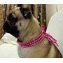 Colar Para Cães E Gatos Com 3 Voltas Feito Sob Medida
