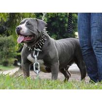 Coleira De Cachorro Couro Spikes Pitbull Rottweiler #0yxd