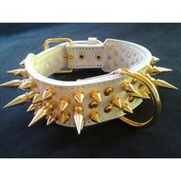 Coleira Couro Luxo Spikes Dourada Pitbull Bullterrier Raças