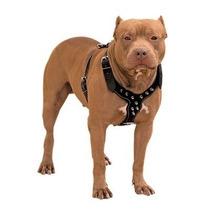 Peitoral Em Couro Cachorros Pitbull Pet Com Spikes #94by