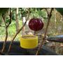Muda Pitanga Anã Gigante Doce Fruta Nativa Do Cerrado