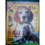 R/m - Revista - Cães & Cia Nº 381 - Beagle & Mastino